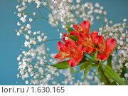 Купить «Альстремерия», фото № 1630165, снято 15 апреля 2010 г. (c) Бушева Анастасия / Фотобанк Лори