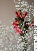 Купить «Альстромерия Ибиза и гипсофила», фото № 1630349, снято 15 апреля 2010 г. (c) Бушева Анастасия / Фотобанк Лори