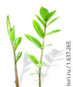 Купить «Молодые побеги растения», фото № 1637265, снято 16 апреля 2010 г. (c) Сергей Белов / Фотобанк Лори