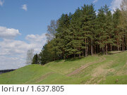Купить «Сосновый лес на холме», фото № 1637805, снято 27 апреля 2008 г. (c) Купченко Владимир Михайлович / Фотобанк Лори