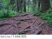 Купить «Лесная тропа», фото № 1644905, снято 17 июня 2008 г. (c) Николай Богоявленский / Фотобанк Лори