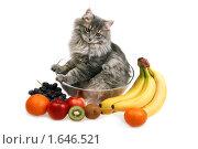 Купить «Молодой сибирский кот в стеклянной вазе и фрукты (изолировано на белом)», фото № 1646521, снято 20 апреля 2010 г. (c) Дмитрий Яковлев / Фотобанк Лори