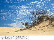 Редкие деревья в пустыне. Стоковое фото, фотограф Максим Горпенюк / Фотобанк Лори