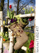 Купить «Русский стиль для Голландии - цветы в валенке», эксклюзивное фото № 1652417, снято 16 апреля 2010 г. (c) Natalia Nemtseva / Фотобанк Лори
