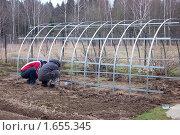 Купить «Каркас теплицы. Сборка на приусадебном участке», фото № 1655345, снято 18 апреля 2010 г. (c) Елена Ильина / Фотобанк Лори