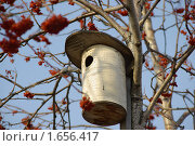 Купить «Скворечник на рябине», фото № 1656417, снято 23 апреля 2010 г. (c) Наталия Ефимова / Фотобанк Лори