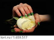 Купить «Ногти», фото № 1659517, снято 20 марта 2010 г. (c) Константин Степаненко / Фотобанк Лори