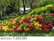 Весенние цветы Парижа (2010 год). Стоковое фото, фотограф Ольга Нигаматулина / Фотобанк Лори