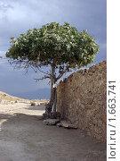 Дерево (2006 год). Стоковое фото, фотограф Святослав Гордин / Фотобанк Лори