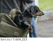 Купить «Ручная кладь...», фото № 1664253, снято 28 июля 2007 г. (c) Владимир Ременец / Фотобанк Лори