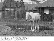 Лошадь. Стоковое фото, фотограф Анастасия Захаренко / Фотобанк Лори