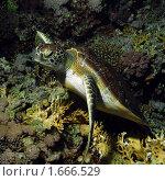 Черепаха. Стоковое фото, фотограф Нина Гурвич / Фотобанк Лори