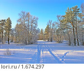 Купить «Зимний лес», фото № 1674297, снято 24 февраля 2008 г. (c) Мирзоянц Андрей / Фотобанк Лори