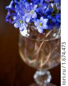 Купить «Букет голубых цветов в вазе», фото № 1674473, снято 5 апреля 2010 г. (c) Анна Лурье / Фотобанк Лори