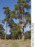 Купить «Тропа в весеннем сосновом лесу», фото № 1676353, снято 25 апреля 2010 г. (c) Виктор Сагайдашин / Фотобанк Лори