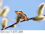 Бабочка. Стоковое фото, фотограф Тучкина Любовь Владимировна / Фотобанк Лори
