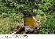 Купить «Ручей в Главном ботаническом саду РАН», эксклюзивное фото № 1678005, снято 8 мая 2009 г. (c) Алёшина Оксана / Фотобанк Лори