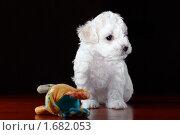 Щенок. Стоковое фото, фотограф Михаил Ковалев / Фотобанк Лори