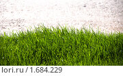 Трава. Стоковое фото, фотограф Михаил Снисаренко / Фотобанк Лори
