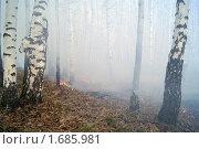 Пожар в лесу. Стоковое фото, фотограф Гуляев Роман / Фотобанк Лори