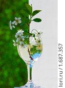 Ветка вишни в бокале. Стоковое фото, фотограф Александр Рыбакин / Фотобанк Лори
