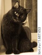 Купить «Кошка», фото № 1687653, снято 14 января 2010 г. (c) Алексей Щукин / Фотобанк Лори