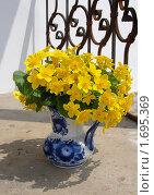 Букет желтых цветов в кувшине. Стоковое фото, фотограф Марина Трушникова / Фотобанк Лори