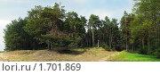 Купить «Сосновый лес весной», фото № 1701869, снято 14 января 2020 г. (c) Вадим Кондратенков / Фотобанк Лори