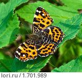 Оранжевая бабочка в зеленой траве. Стоковое фото, фотограф Попонина Ольга / Фотобанк Лори