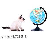 Купить «Котенок смотрит на большой глобус. На белом фоне.», фото № 1702549, снято 14 мая 2010 г. (c) Алексей Рогожа / Фотобанк Лори