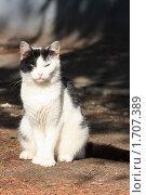 Купить «Кот», фото № 1707389, снято 15 мая 2010 г. (c) Михаил Митин / Фотобанк Лори