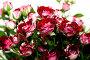 Красные розы, фото № 1709489, снято 16 мая 2010 г. (c) Asja Sirova / Фотобанк Лори