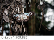 Купить «Бабочка», фото № 1709885, снято 10 мая 2009 г. (c) Анжелика Самсонова / Фотобанк Лори