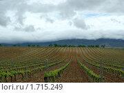 Виноградники Испании (2010 год). Стоковое фото, фотограф Наталья Вахменина / Фотобанк Лори