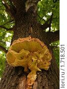 Чудо-гриб. Стоковое фото, фотограф Вера Лаврентьева / Фотобанк Лори