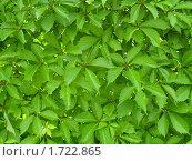 Растение. Стоковое фото, фотограф Сергей  Мацнев / Фотобанк Лори