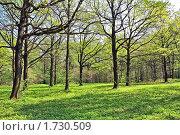 Купить «Весенняя дубовая роща», фото № 1730509, снято 8 мая 2010 г. (c) Владимир Сергеев / Фотобанк Лори