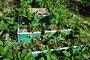 Выращивание клубники на ярусной грядке, фото № 1740209, снято 29 мая 2010 г. (c) Анна Мартынова / Фотобанк Лори
