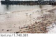 Чайки мокнущие под дождем. Стоковое фото, фотограф Svet / Фотобанк Лори