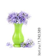 Голубые цветы. Стоковое фото, фотограф Елена Блохина / Фотобанк Лори