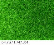 Купить «Травяной фон», иллюстрация № 1747361 (c) Сергей Шляев / Фотобанк Лори