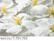 Купить «Цветы яблони», фото № 1751753, снято 28 мая 2010 г. (c) Михаил Митин / Фотобанк Лори