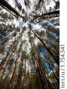 Купить «Деревья в лесу», фото № 1754541, снято 4 июня 2010 г. (c) Толоконов Дмитрий Львович / Фотобанк Лори