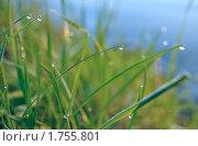 Купить «Роса на траве у озера», фото № 1755801, снято 16 мая 2010 г. (c) Владимир Соловьев / Фотобанк Лори