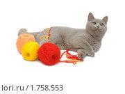 Купить «Британский голубой кот с клубками цветных ниток», эксклюзивное фото № 1758553, снято 14 марта 2010 г. (c) Вячеслав Палес / Фотобанк Лори