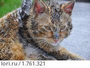 Извалявшийся в грязи рыжий кот. Стоковое фото, фотограф Александр Романов / Фотобанк Лори