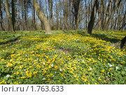 Купить «Цветочный ковер», эксклюзивное фото № 1763633, снято 29 апреля 2008 г. (c) Svet / Фотобанк Лори
