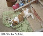 Щенок (2008 год). Редакционное фото, фотограф Людмила Черикова / Фотобанк Лори