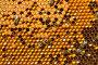 Соты с пергой и расплодом, фото № 1770701, снято 13 июня 2010 г. (c) Андрей Давиденко / Фотобанк Лори