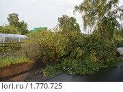 Купить «Последствия урагана», фото № 1770725, снято 11 июня 2010 г. (c) Качанов Владимир / Фотобанк Лори